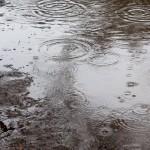 アレルギー性鼻炎の原因は雨?雨の日になると酷くなる原因は?